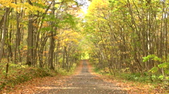 Paved road in the forest, Hokkaido, Japan Stock Footage