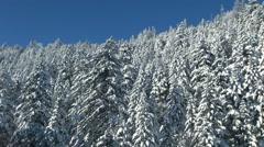 Snowy forest, Hokkaido, Japan Stock Footage