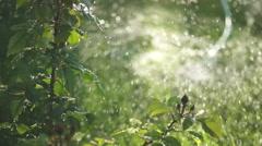 Sprinkler on Lawn Stock Footage