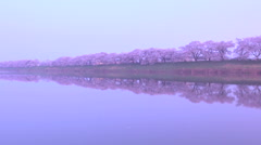 Cherry blossoms by the river, Miyagi Prefecture, Japan Stock Footage