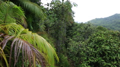 Panorama of the Vallée de Mai Nature Reserve Stock Footage
