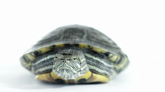 Red-eared slider Stock Footage