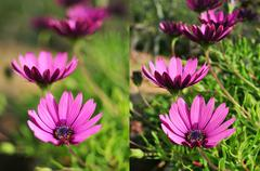 Photos of purple flowers shot with different apertures Stock Photos