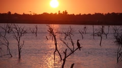 Sunset with birds,Batticaloa,Sri Lanka Stock Footage