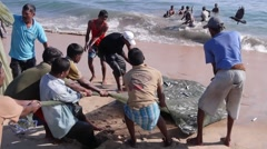 Fisherman pull fish ashore,Batticaloa,Sri Lanka Stock Footage