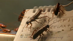 Lots of dirty cockroaches are on a calendar Stock Footage