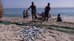 Baskets with fish transported,Batticaloa,Sri Lanka Stock Footage