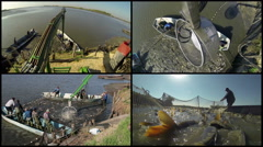 Harvest of Carps from Fishpond Stock Footage