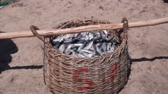Basket full of fish,Batticaloa,Sri Lanka Stock Footage