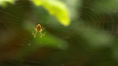 20140721 Spider Hanging in Web [4K, UHD] - stock footage