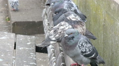 Lots of pigeons standing on the bench in the park - stock footage