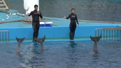 Dolphin display in the Dolphinarium, L'Oceanogràfic, Valencia, Spain. Stock Footage