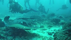 Marble rays and scuba divers Stock Footage