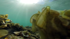 Underwater : clear sea water with moving grass Stock Footage