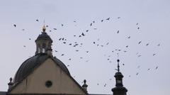 Birds flying around the church roof Stock Footage