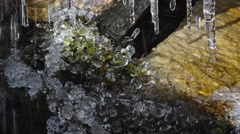 Torrent with  sticks of ice and iced  moss Stock Footage