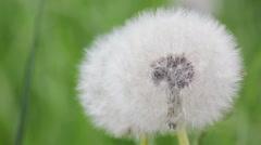 daisy on meadow - stock footage