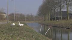 Amsterdam 4K suburbs _geese _1 Stock Footage
