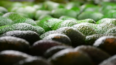 Avocados pieces fruit rolling in packaging line Stock Footage