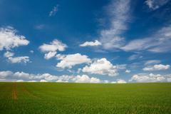 Lovely summer field with blue sky Stock Photos