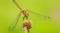 Dragonfly is take off Stock Footage