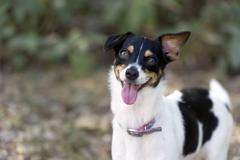 Dog Crazy Happy Silly Stock Photos