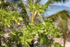 Stock Photo of Defocused blurred background palm tree