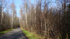 Narrow asphalted path among forest at spring sunny day Stock Footage