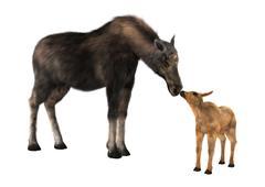 Female Moose and Calf - stock illustration
