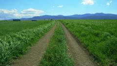 Rural grassy country road,fields of green, extending to the horizon. Stock Footage