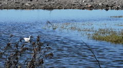 Birds in the mouth of river Stock Footage