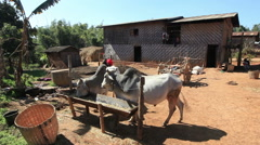 static scene of a rural farm near Kalaw, Burma - stock footage