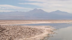 Flamingos at the salt lake in Atacama desert, Chile. Stock Footage