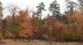 Forest autumn landscape.  PAL Footage