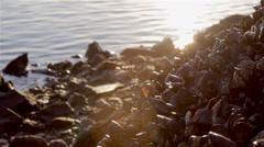 Algarve - Tavira - Mussels on Rocks Background B Stock Footage