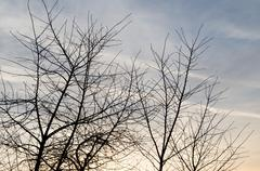 Bare tree branches at dawn sun Stock Photos