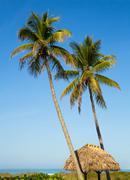 Tropical Getaway Stock Photos