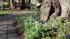 Close Up of Old Stone Church Yard Path with Tree, Beautiful Flowers & Bench Stock Footage