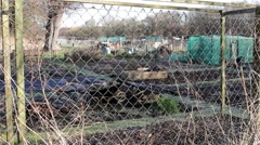 Allotment Scene Through Fence Gardening Wide Shot - Rural Village / Town Scenes Stock Footage