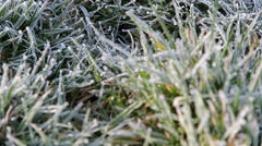 Close Up Pull Focus Grass Showing Morning Dew / Frost & Gentle Breeze - Nature - stock footage