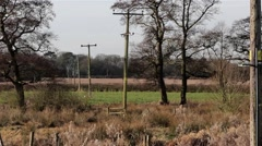 Telephone Poles, Lines & Cables Stretch Away in Beautiful Meadow Field - Country Stock Footage