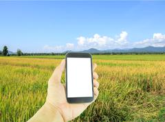 Hand holding smart phone on green paddy rice background - stock illustration