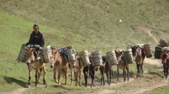 Stock Video Footage of A man is leading a group load donkeys,Tagong,China, Peoples Rep