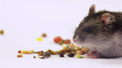 Satisfied hamster surrounded by food taken from close up Stock Footage