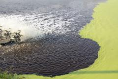 Wastewater Treatment Using Duckweed. - stock photo