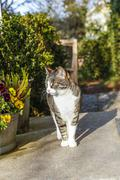 white and brown cat sitting on doorstep of the house - stock photo
