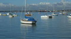 Sailing Boats, Shoal Bay, Auckland Harbour Stock Footage