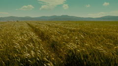 Rural grassy country road,fields of green, extending to the horizon. - stock footage