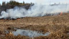Fire spread along the grass and forest. Stock Footage