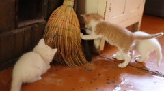 cute  kittens playing indoor - stock footage